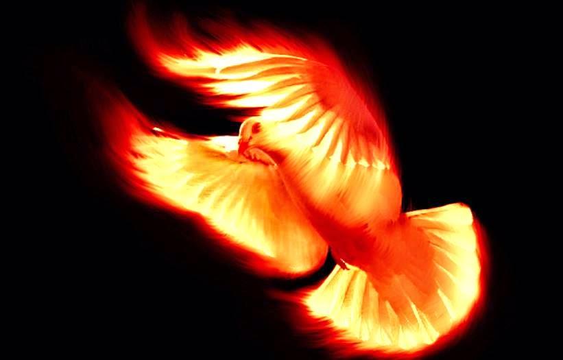 paloma-de-fuego.jpg